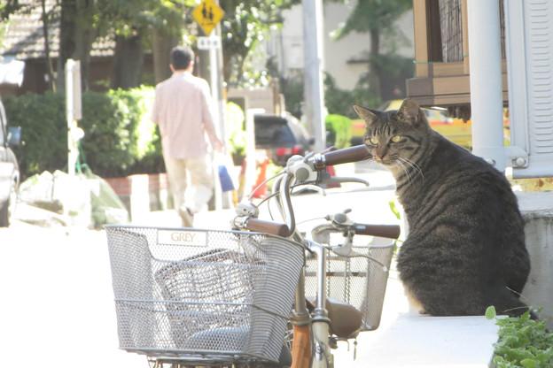 通学路の猫