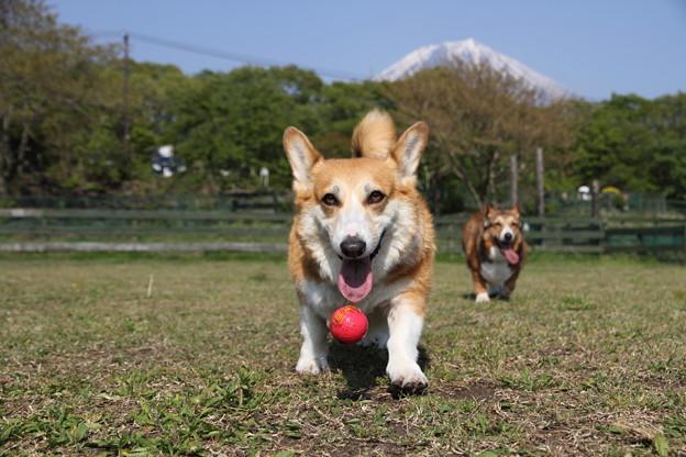 はしゃいでボールで遊ぶのは初めの10分だけで・・・。