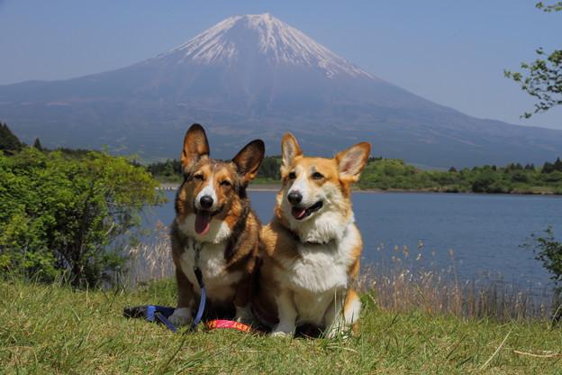 富士山をバックに。いつもミルカはよそ見・・・。