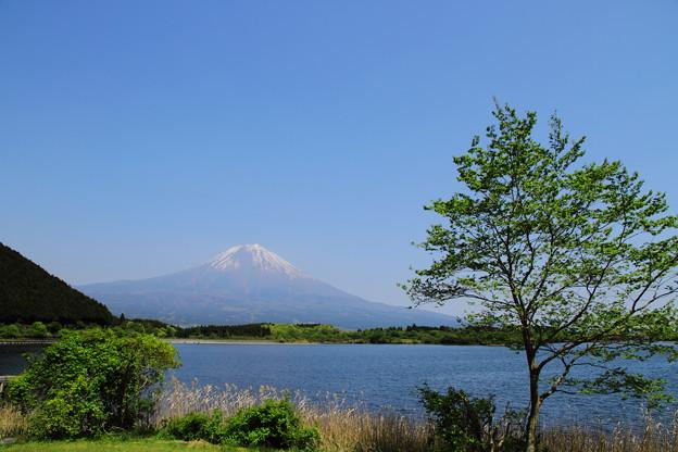 田貫湖から見た富士山