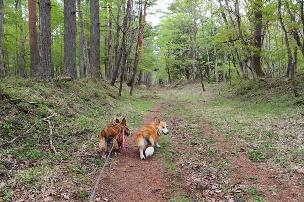 お散歩するにはちょうど良い林道でした。