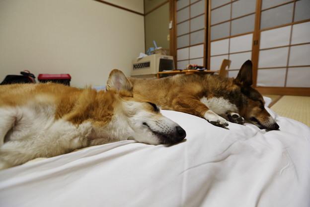 猛暑の中遊んだ後は、爆睡。