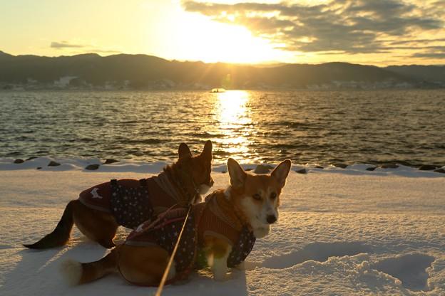 諏訪湖と夕日と短足と・・・