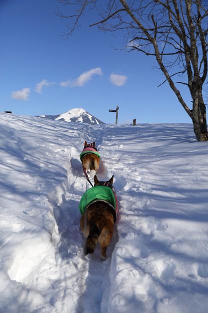 大雪も落ち着いたところでスノーシュー。
