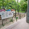 Photos: tokusima120803022
