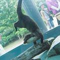 Photos: tokushima120805323