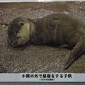 Photos: notojima121208006