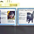 Photos: echizen121209007