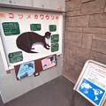 写真: hamamatsu130101004