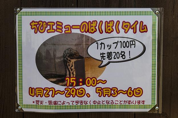 Photos: nanpara130428011