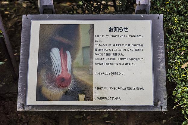 ichikawa130420008