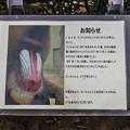 Photos: ichikawa130420008