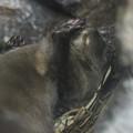 Photos: fukushima130716017