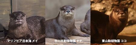 mei_nana_koko