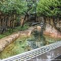写真: zoorasia131020002