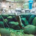 写真: zoorasia131020096