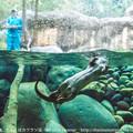 写真: zoorasia131020100