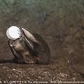 Photos: marinepia130717421