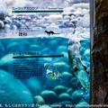 写真: zoorasia131228191