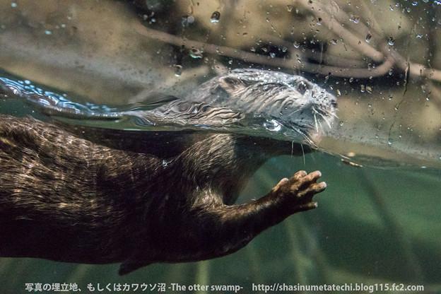 Photos: maruyama1401010529