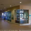 Photos: fukuoka201403160001