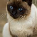 Photos: yamanao999_cats_094