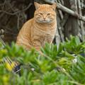 Photos: yamanao999_cats_095