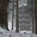 写真: 羽黒山五重塔