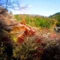 写真: 小原・四季桜と紅葉を追って001
