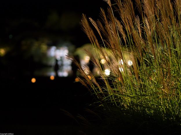 岡山後楽園 秋の夜間開園