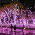 Photos: 新宿テラスシティ イルミネーション '17-'18