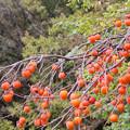 坂を転げ落ちる柿