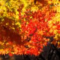 Photos: 弘法山の紅葉 幾重にも重ねて