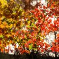 Photos: 弘法山の紅葉 奥に