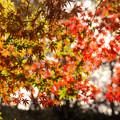 弘法山の紅葉 前に