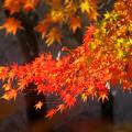 Photos: 弘法山の紅葉 赤い津波