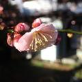Photos: 雨上がりの桃