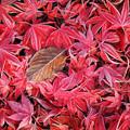 写真: 赤い霜