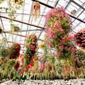 Photos: 花鳥園の花たち