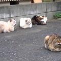 Photos: 猫の集会所