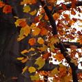 写真: 秋の色…