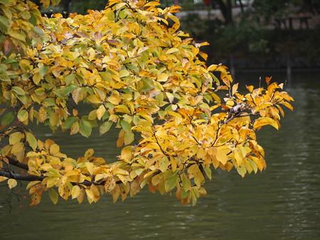 秋の葉っぱ…