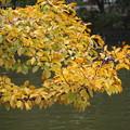 写真: 秋の葉っぱ…