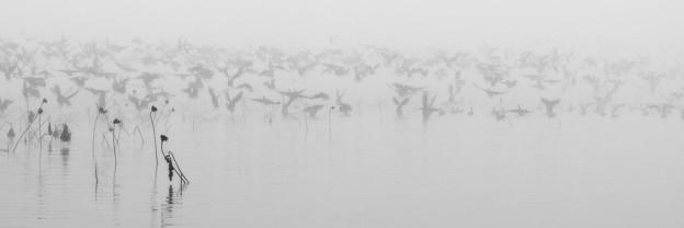 朝霧に翔る
