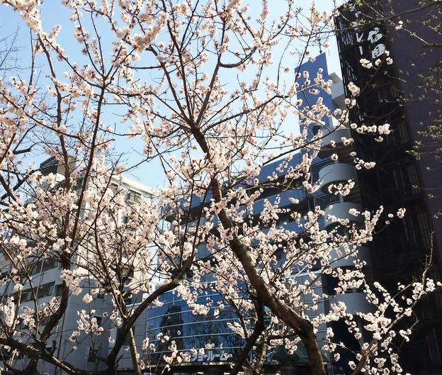 千川通り 2014.3/25