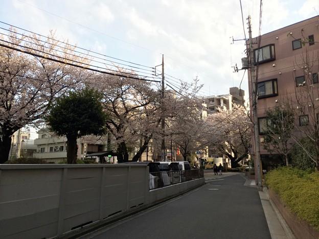 千川通り 桜。 2014 4/5