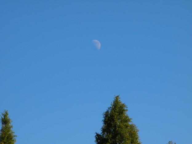 白月 ─下弦の侯─