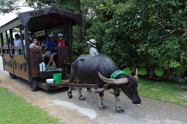 水牛車(2013/08/07 ビオスの丘)