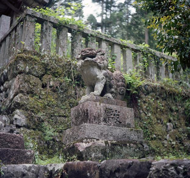 山の中の神社 狛犬