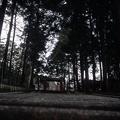 写真: 真禅院 門